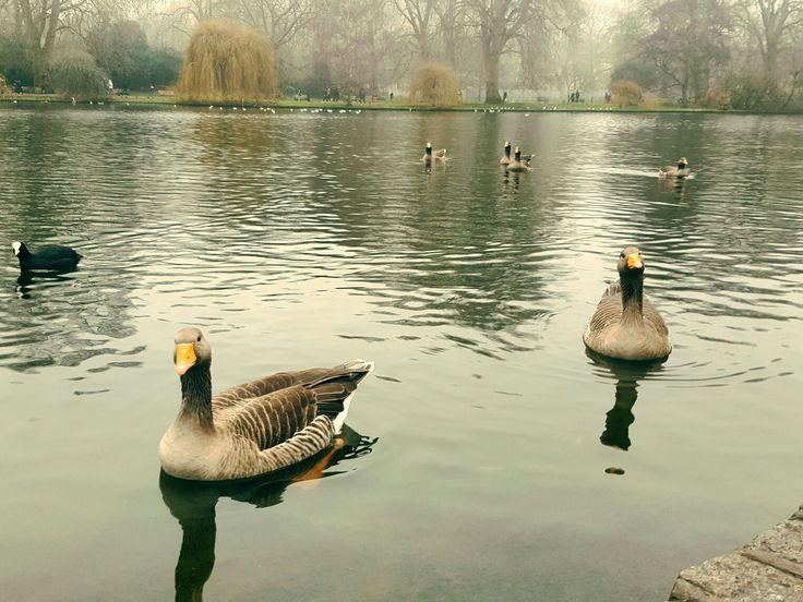 #london #winter #greenpark #holidays