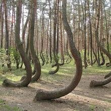 Stangest Forest On Earth  Located in north west Poland (not far from Szczecin)