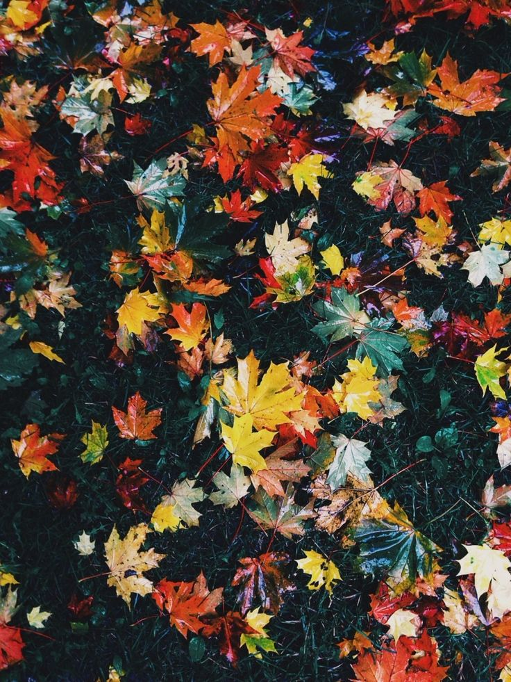 Autumn inspiration #tektekyarn