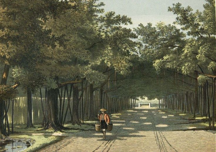 Josias Cornelis Rappard - Pohon Beringin di Kebun Raya Bogor