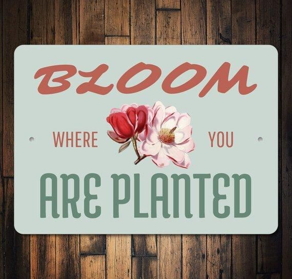 Bloom Where You Are Planted Sign Flower Decor Flower Garden Sign Flower Garden Decor Cute Plant Signs Bloom Where You Are Planted Bloom Where Youre Planted