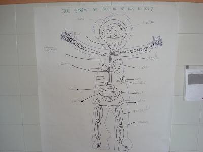 SEGON A: El cos. CEIP Es Castell. Menorca. Antònia Sastre Castell.