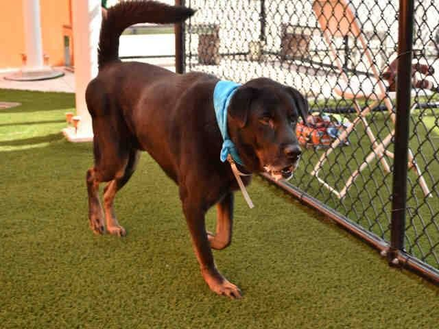 **CODE RED**\r\n\r\nI am a neutered male black and tan German Shepherd Dog mix.\r\nThe shelter staff thinks I am about 4 years old and I weigh 61 pounds.\r\nI was found as a stray and I am available for adoption.\r\n\r\n***PLEASE HELP ME - MY TIME IS LIMITED*** \r\nI'm currently in IMMEDIATE DANGER of being killed. So if you are interested in saving me and any of my friends, we urge you to work as quickly as possible.\r\n\r\nIf you can save one of these precious lives, we urge you to hurr...