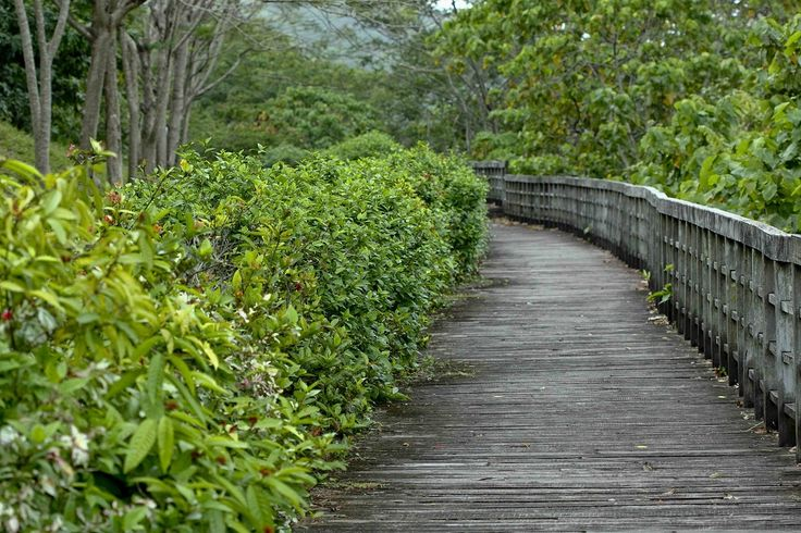 eco tourism at thenmala