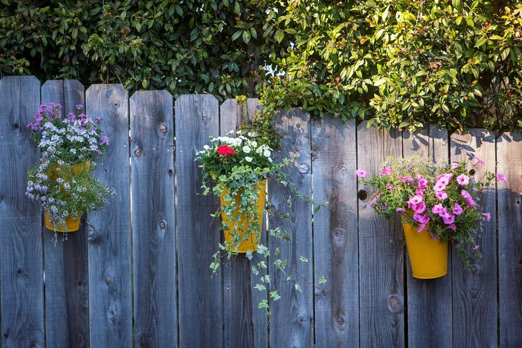 Adding color to your backyard is as easy as planting flowers in color pots and hanging them on your fence.