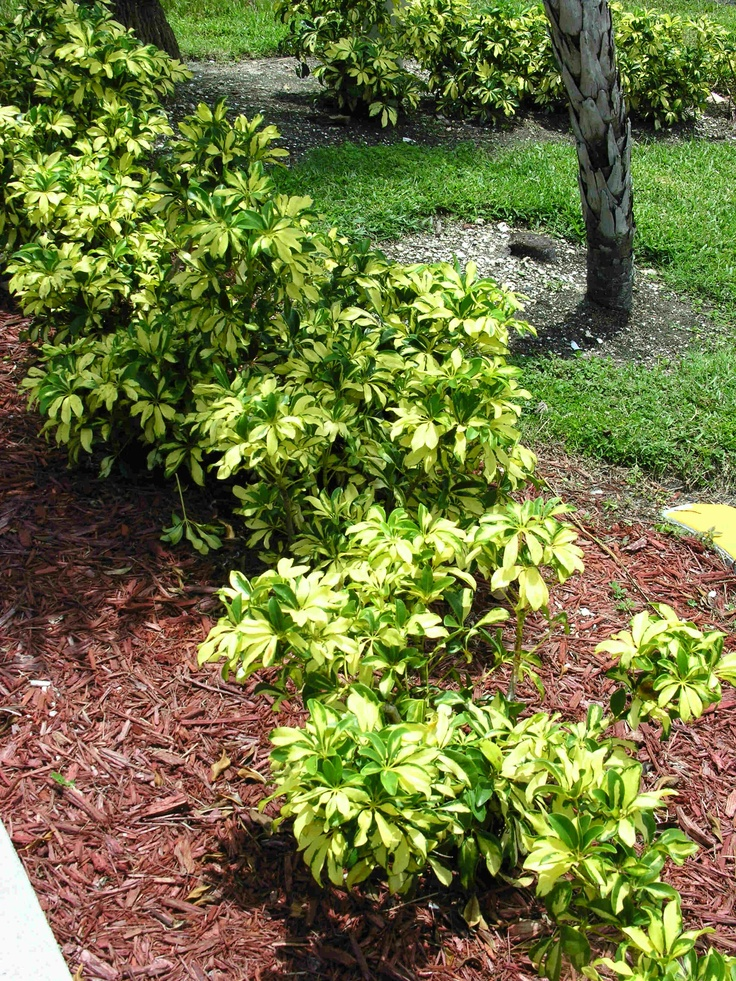 Top 25 ideas about growing grounds landscaping plants on for Popular landscaping plants