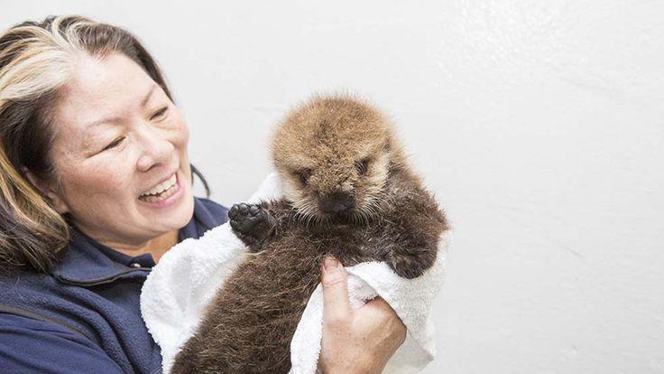 Baby sea otter says hi.
