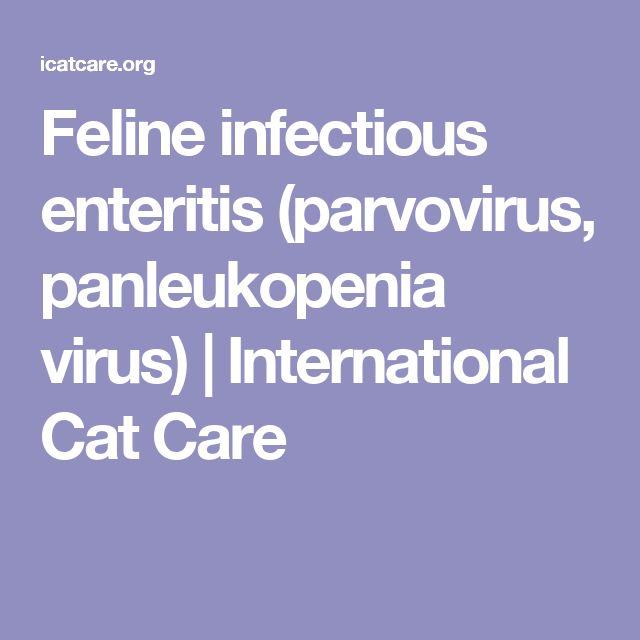 Feline infectious enteritis (parvovirus, panleukopenia virus)   International Cat Care