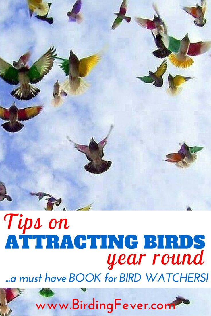 78 best bird books images on pinterest backyards bird book and