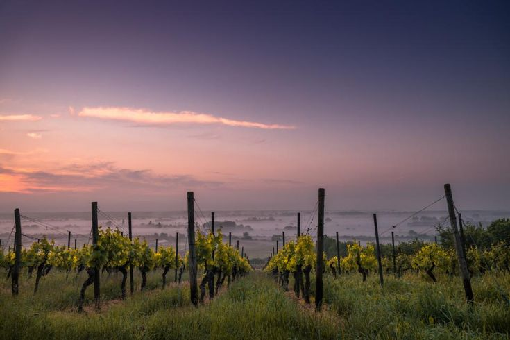 Romania ranked first in the European Union for the number of vineyard owners in 2015, according to data from the European Statistical Office (Eurostat).