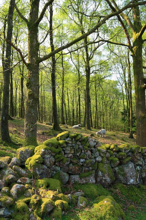thedruidsteaparty: Eskdale Woods, Lake District, England by...