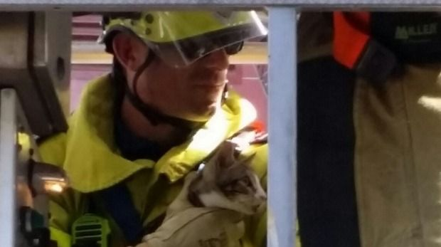 It took six firefighters two council rangers and one large cherry picker but the cat's fine. http://ift.tt/1RKqA7z