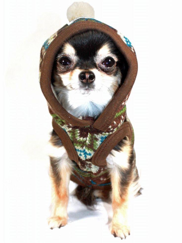 16 best Dog jumper images on Pinterest | Dog sweaters, Dog jumpers ...