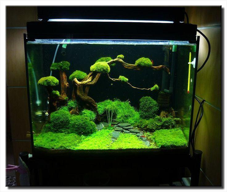 Zen Garden Aquascape My Zen Room Diy Fish Tank Aquascape Aquascape Aquarium