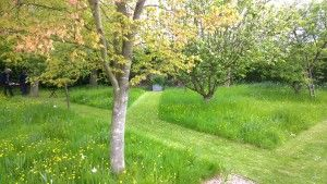Orchard at Woodpeckers, Essex NGS