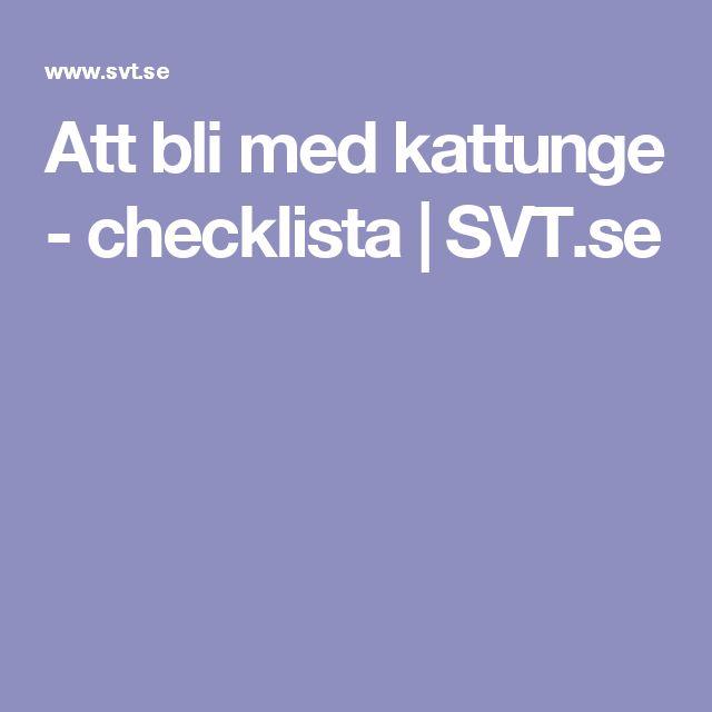 Att bli med kattunge - checklista | SVT.se