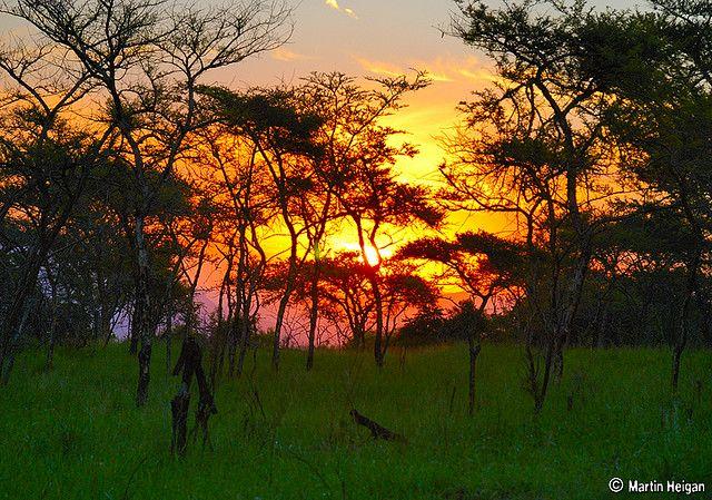 A Bushveld sunset through the trees. Nelspruit, Mpumalanga, South Africa