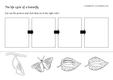 Ned. versie!!! Butterfly life cycle cut and stick (SB144) - SparkleBox
