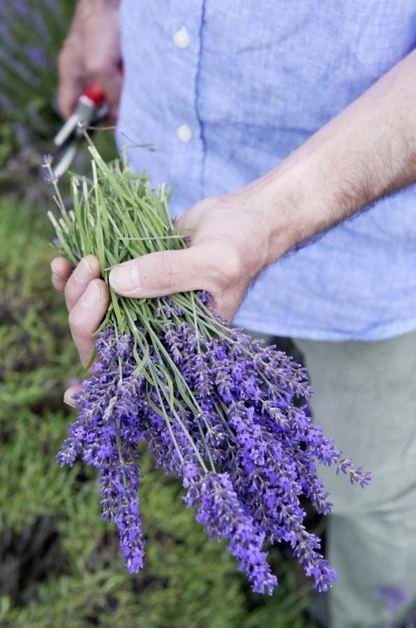 Pin Auf Fesche Blumen Und Pflanzen