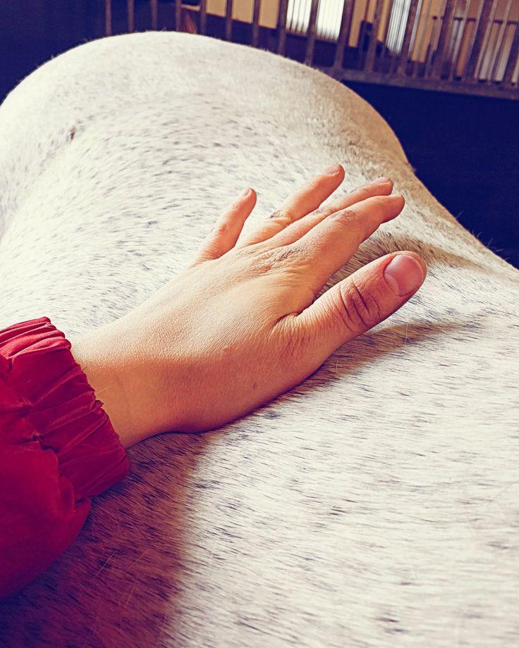 Tiesitkö, että satuloinnin vastustaminen, hidas lämpiäminen alkulämmittelyssä, vaikeudet kengittäessä, kiukuttelu ja poikkeuksellisen runsas hännän huiskiminen voivat kertoa hevosen selkäkivusta? Akupainanta, hieronta ja kinesioteippaus ovat tehokkaita keinoja helpottaa ongelmaa. Lue lisää tai varaa samantien aika (uudelle asiakkaalle toinen hieronta ilmaiseksi!)    www.impulso.fi  Puh. 045 845 8458    Hevoshieronta, hevoshieroja, hevosshiatsu, akupainanta, hevosen selkäkipu, hevosen…