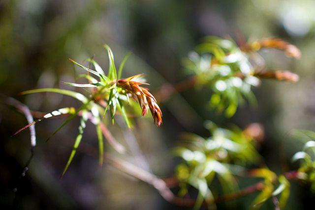 Blue Mountains Australia http://www.annehoang.com.au/photoblog/