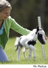 Meet Einstein, the world's smallest horse- Shut the eff up! This is a thing? Where do I get one?