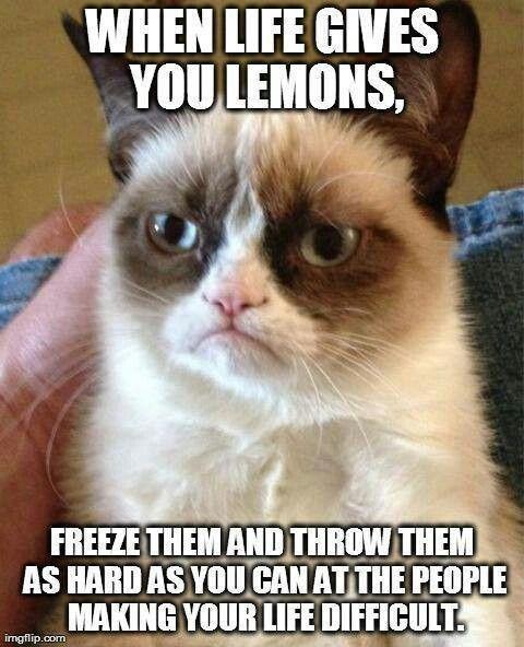 Grumpy cat being grumpy. ^^