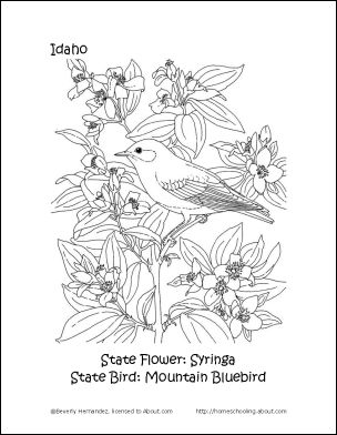 Idaho Printables State Bird And Flower Coloring Page