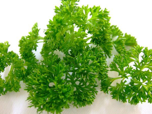 Voulez-vous savoirquelles sont les vertus du persil pour la santé et la beauté ?Alors, n'hésitez pas à lire cet article et à consommercette merveilleuse plante aromatique de différentes manières !