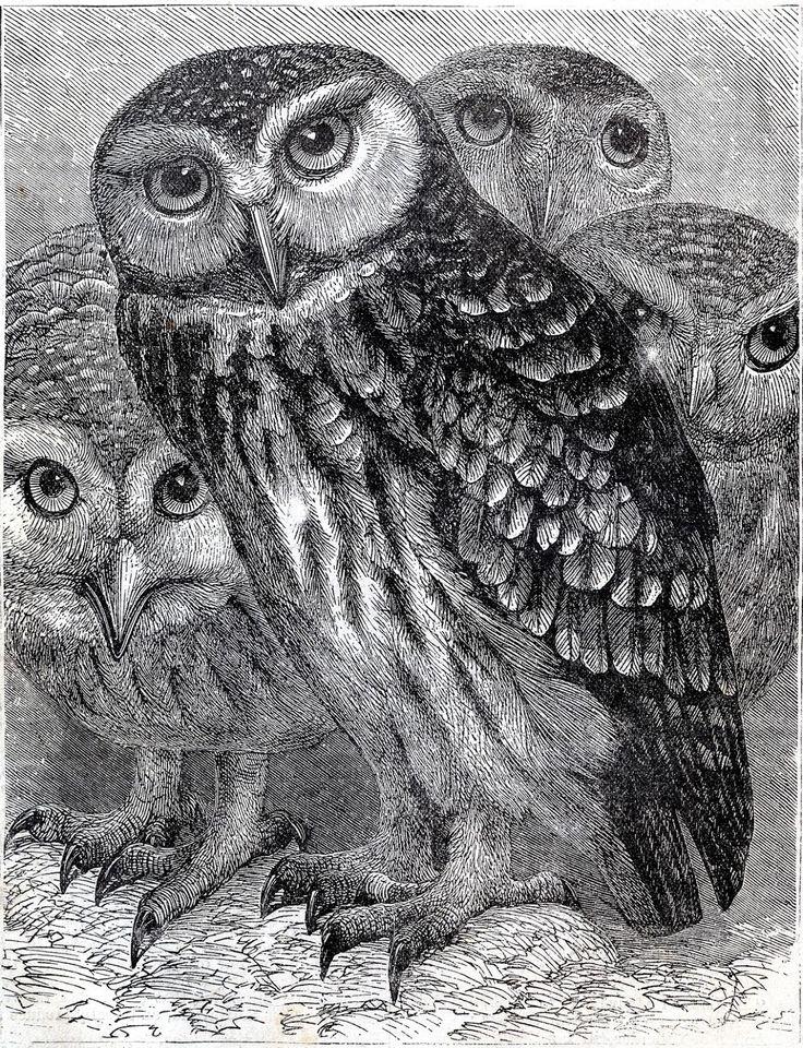 Vintage Download Owls Printable Graphics Fairy