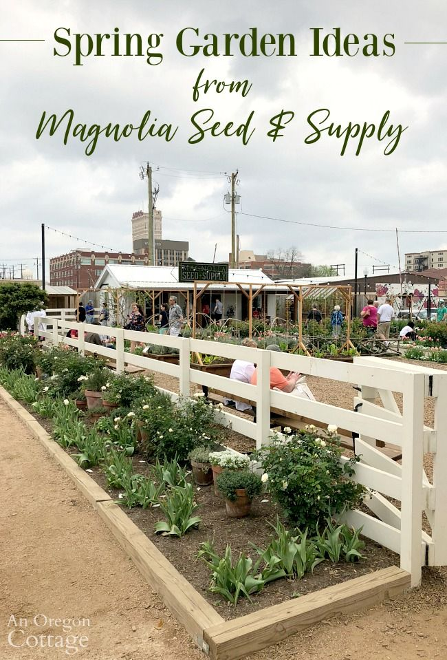 Spring garden ideas from the grounds of Magnolia Market and Magnolia Seed and Supply including flowers, vegetables, and building ideas. #springgarden #gardening #spring #magnoliamarket #magnoliagarden