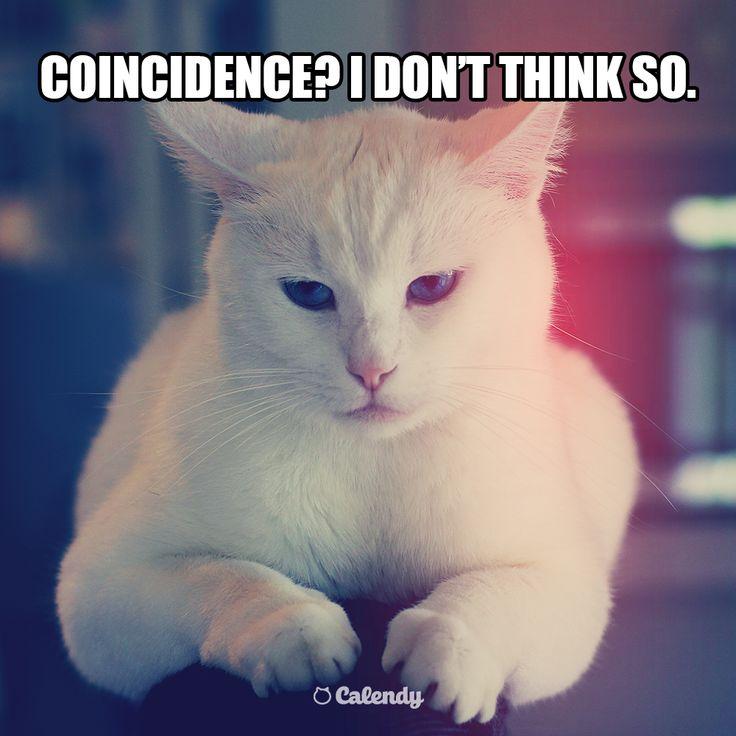 Today is BOTH International Day Of #Happiness AND #Spring...  #cat #WhiteCat #InternationalDayOfHappiness #SocialMedia #cats #Season #SocialMediaTool #SocialMediaCalendar #SocialMediaMarketing