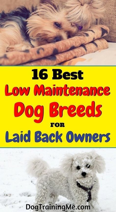 Do you want to know what dog breeds are low maintenance