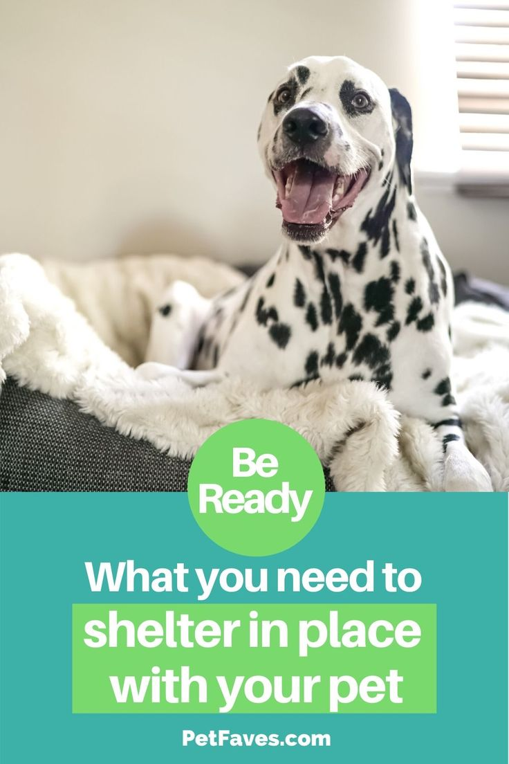 Pin On Pet Disaster Preparedness