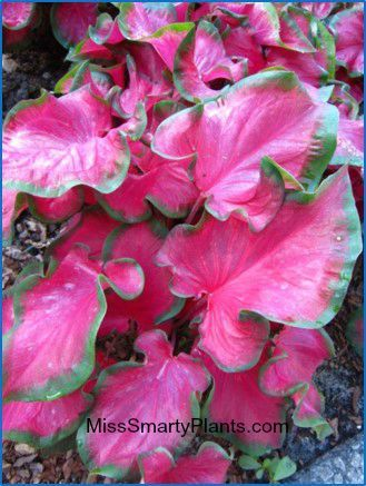 Best 25 full sun perennials ideas on pinterest - Flowers that love full sun and heat ...