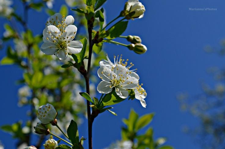 """Blue spring"""