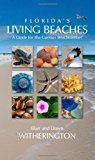 how to find shark teeth at venice beach florida