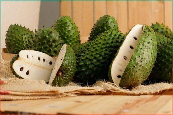Фрукт Гуанабана или плод дерева гравиола- убивает раковые клетки