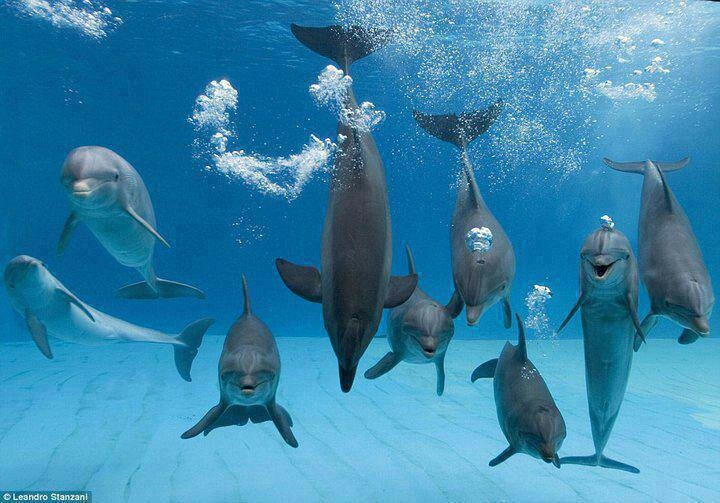 images of dolphins playing - photo #23