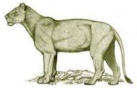 Singa Amerika http://evobig.blogspot.com/2012/08/mengenal-kucing-besar-zaman-prasejarah.html