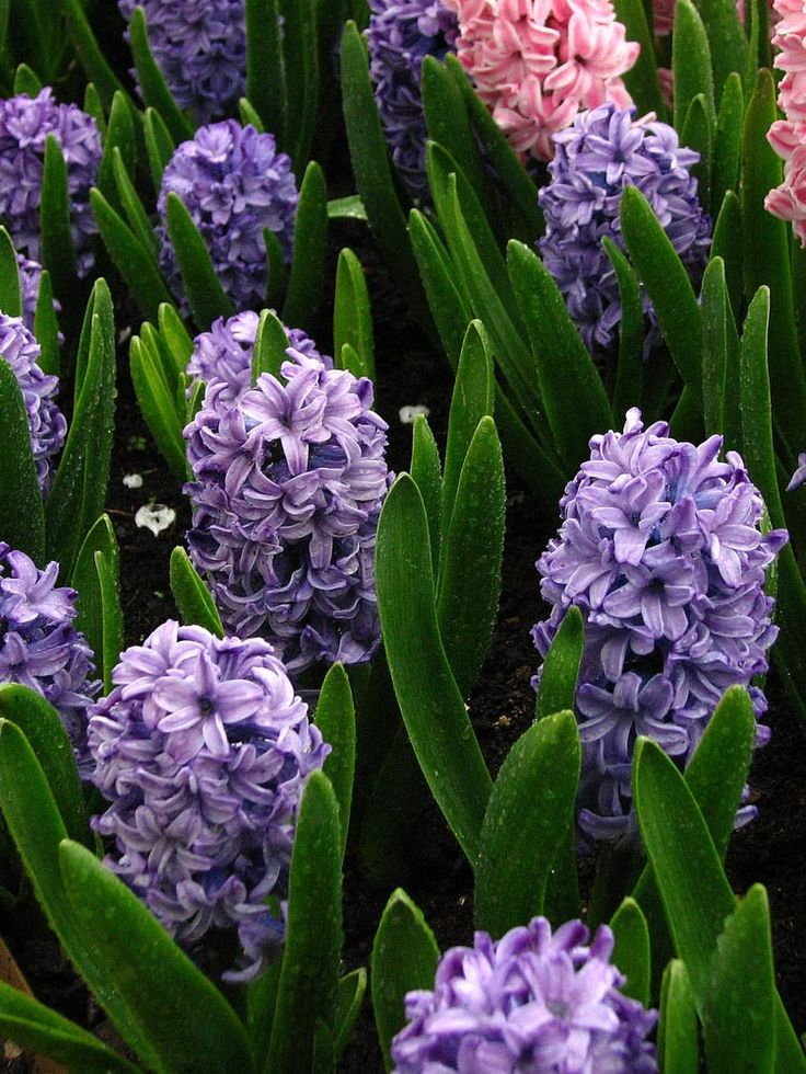 what is the most fragrant flower
