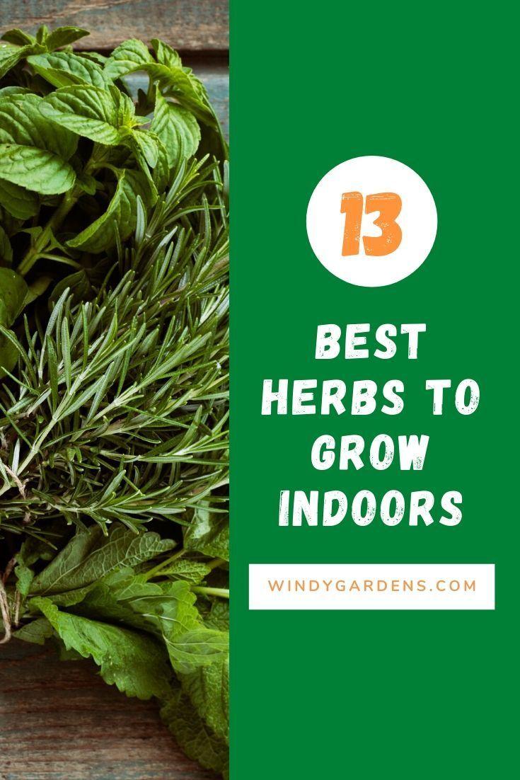 Best Herbs To Grow Indoors In 2020 Best Herbs To Grow 400 x 300