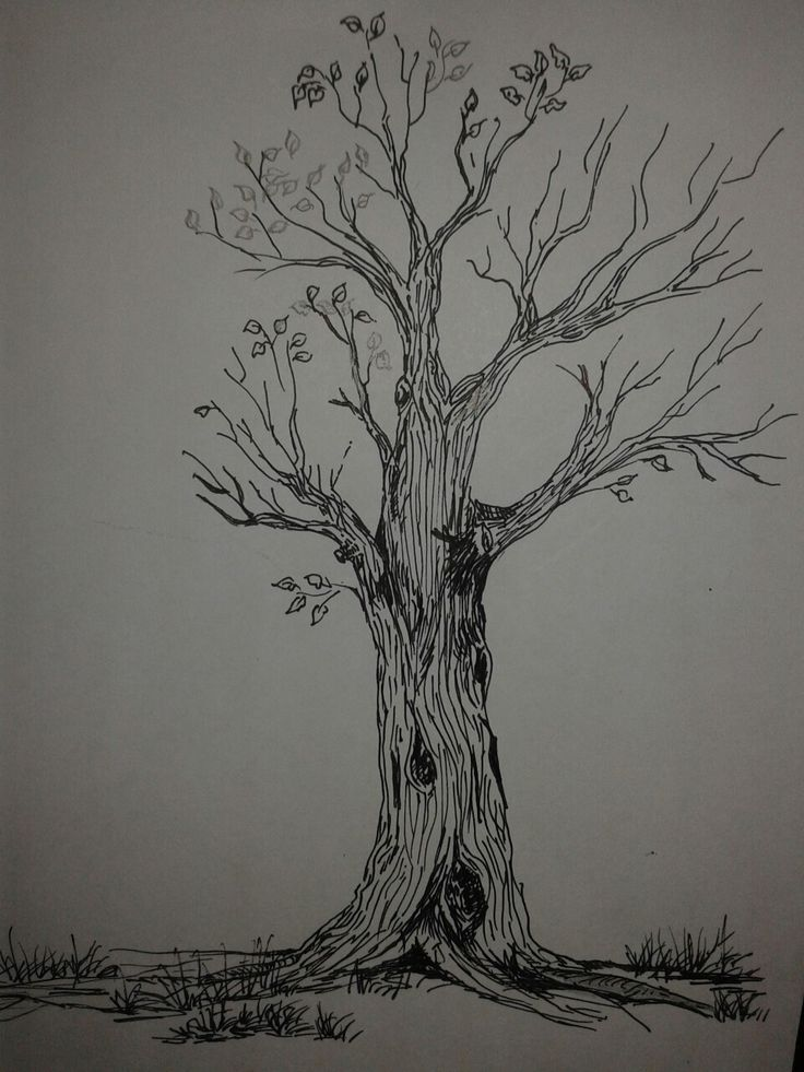 44 best arbol dibujo images on Pinterest  Draw Drawing and