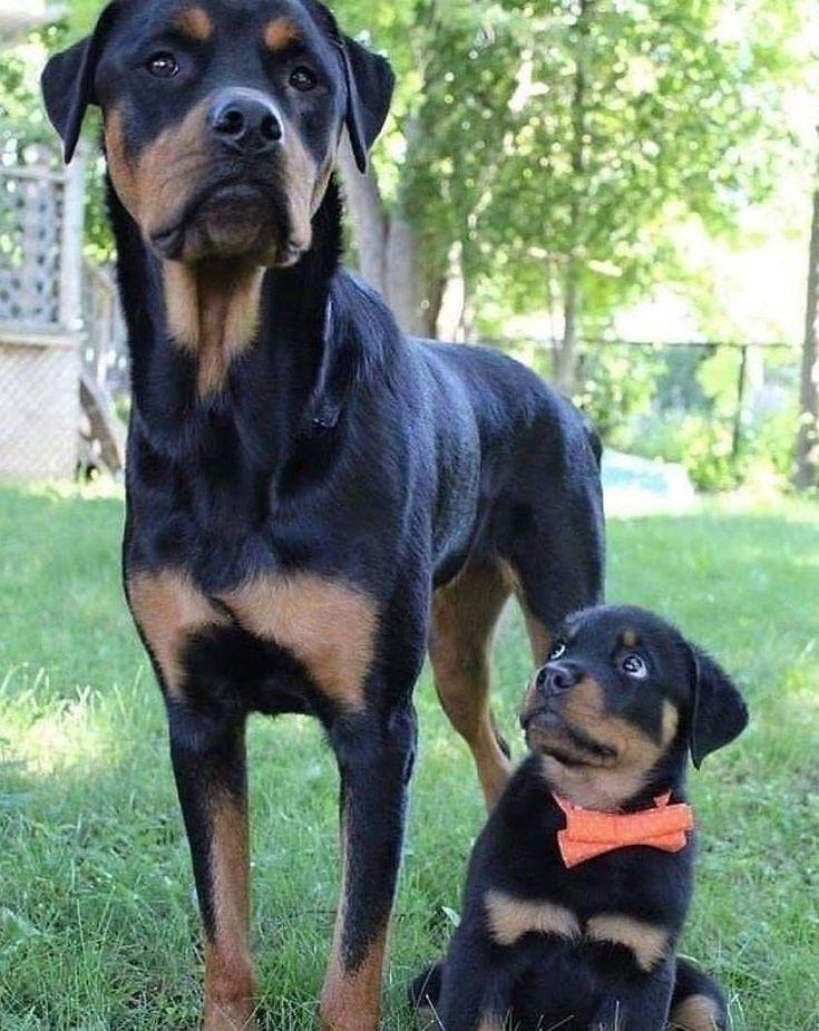 Pin De Gabriela Pollio En Bebes Ninos Memes De Animales Chistosos Memes De Animales Divertidos Amantes De Los Perros