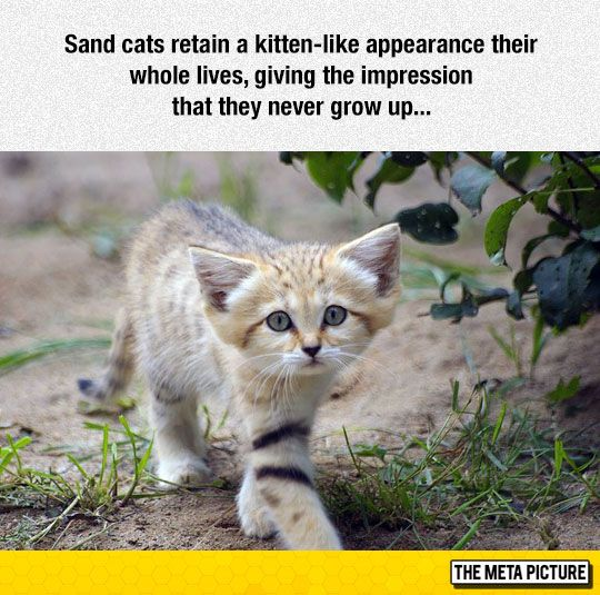 jordan columbia I Want A Sand Cat