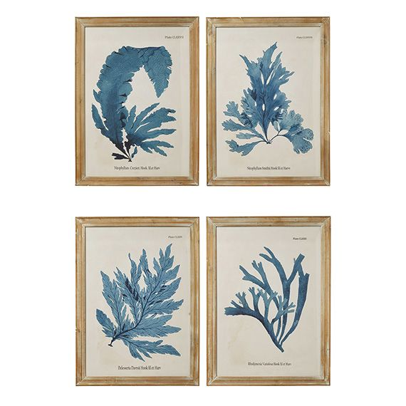 Seaweed Framed Prints, Set of 4 - Brown