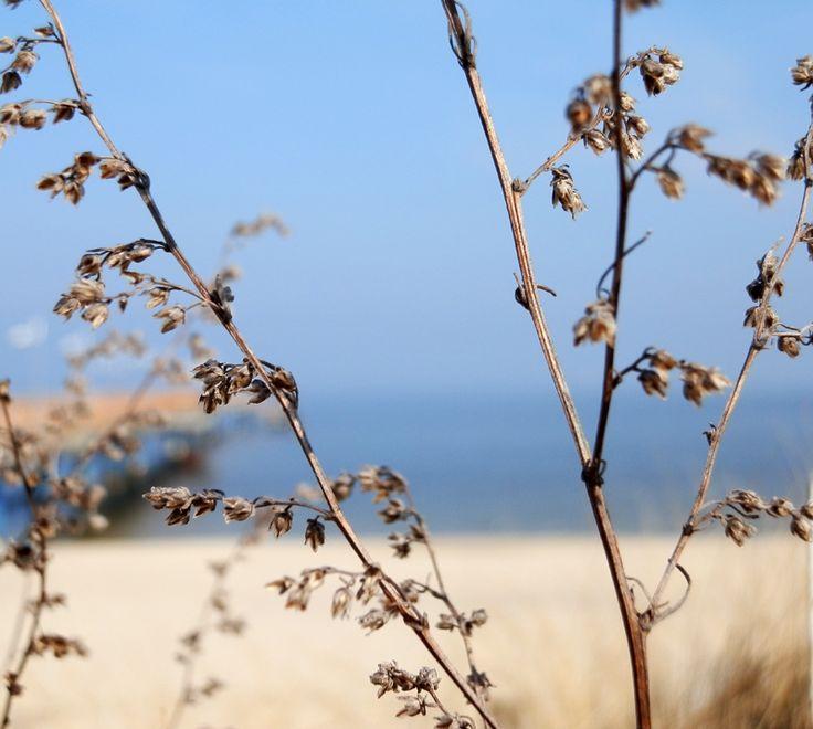 Insel Usedom Bansin