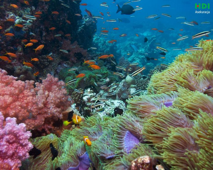 how to go to great barrier reef from melbourne