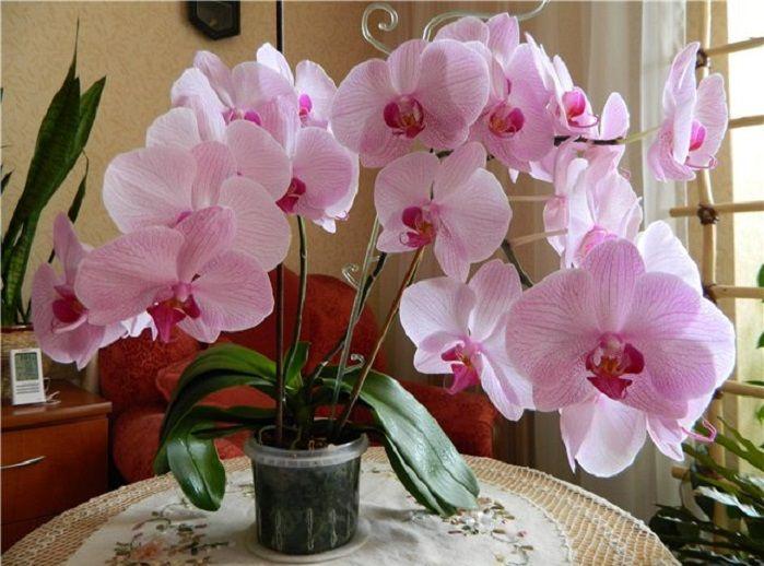 5 trükk, amit tudnod kell, ha azt szeretnéd, hogy sokszor virágozzon az orchideád! - Bidista.com - A TippLista!