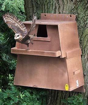 Best 20 Owl House Ideas On Pinterest Owl Box Rustic